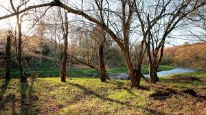 mongaup river forest a lasting legacy delaware highlands