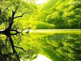 green tree lake pretty green things vanishing
