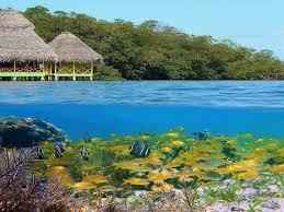 underwater bungalow bungalow santa monica