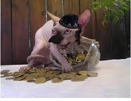 Hairless Cat Meme - psbattle hairless cat with spilled coins photoshopbattles