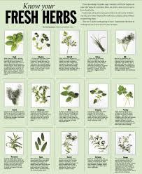 herb chart herbs chart fresh herbs chart w pics cooking 101 pinterest