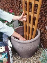 How To Arrange Indoor Plants by Best 25 Potted Plants Patio Ideas On Pinterest Potted Plants