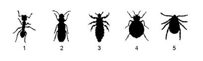 Do Bed Bugs Jump From Person To Person Bed Bugs Are In A Lot Of Hotel Rooms U2014 Here U0027s How To Spot Them