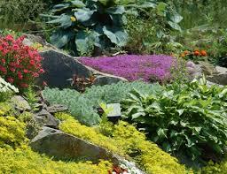 rock garden plant selection guide sun plants zone 5