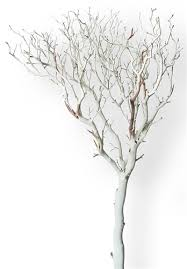 manzanita tree branches sandblasted manzanita tree 84 blooms and branches