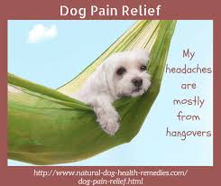 boxer dog gum problems dog pain relief and medications causes and symptoms of a dog in pain