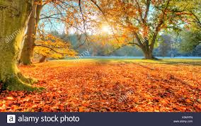 beautiful colored trees in autumn landscape photography snow on