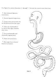 kleeamsti human body systems