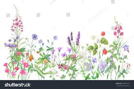 wild flowers in wild meadows panoramic view wild meadow flowers grass stock illustration