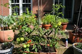 design garden specific plants vegetable gardening in small spaces
