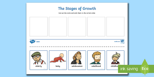 life cycle cut and stick activity human stages of growth