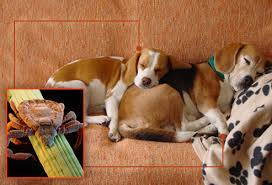How Do Blind Dogs Know Where To Go Fleas Ticks Pets And What To Do In Pictures
