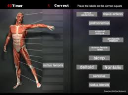 Anatomy And Physiology Muscle Labeling Exercises Anatomy Games Real Bodywork