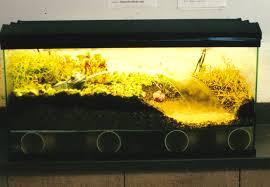 terrarium care u2014 xtreem plants