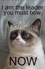 Grumpy Cat Meme Images - grumpy cat meme grumpy cat pictures