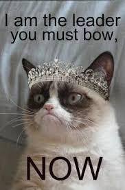 Tard The Cat Meme - grumpy cat meme grumpy cat pictures