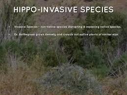 non native invasive plants desert by brittnaaaay vasquez