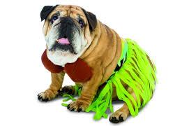 English Bulldog Halloween Costumes 15 Hilarious Halloween Costumes Dogs Dog U0027s