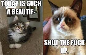 Funny Angry Memes - 15 angry cat memes very funny 2013 funny lytum