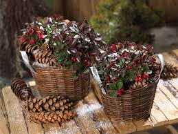 winterharte pflanzen balkon gartencenter späth grün erleben winterwunderwelt