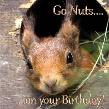 birthday card squirrel go nuts on your birthday funny squirrel