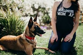 4 types of belgian sheepdogs malinois mom af t shirt racerback tank the wild whiskers