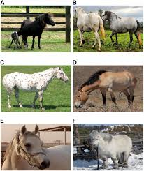 Are Horses Color Blind The Evolutionary Origin And Genetic Makeup Of Domestic Horses