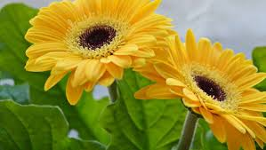 Pictures Of Beautiful Flowers In The World - flower background hd photos of most beautiful flowers in the world