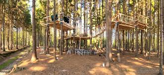 tree climbing and tree house building in republic