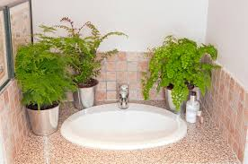Best Plants For Bathroom The Best Houseplants For Your Bathroom