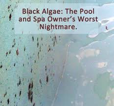 how to kill problem algae in pools and spas dengarden