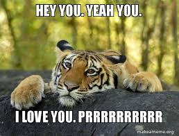 Hey I Love You Meme - hey you yeah you i love you prrrrrrrrrr confession tiger make