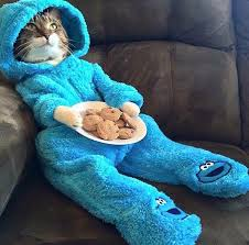 Cat Suit Meme - a cat in a cookie monster costume holding cookies what more do you