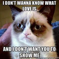 Lovers Meme - cat lover meme cat and dog lovers cat and dog lovers