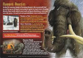 woolly mammoth wierd u0027wild creatures wiki fandom powered wikia