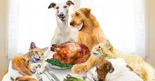are these thanksgiving dishes safe for pets