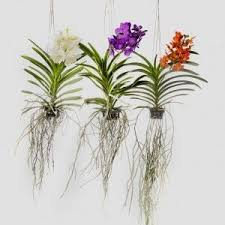 Orchids Care 801 Best Orchid Tutorials Images On Pinterest Orchids Orchid