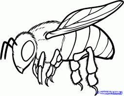 cartoon drawing honey bee how to draw a honey bee stepstep bugs