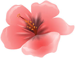 pink flower large pink flower clipart png image gallery yopriceville high