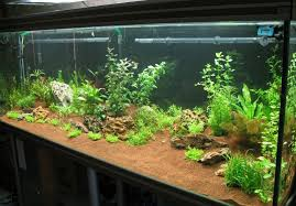 Aquarium Decor Ideas Decorations Aquascaping Home Aquarium Design With Glass Panels