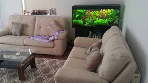 fish tank amazing addition to your sitting room youtube