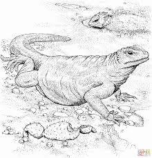 komodo dragon download coloring page animal drawings of