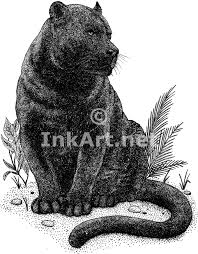 black panther panthera onca line art and full color illustrations