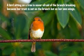 quotes about birds inspirational picture messages zitations