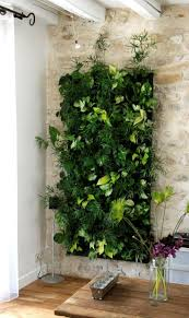 Interior Garden Plants by Best 25 Wall Gardens Ideas On Pinterest Vertical Garden Wall
