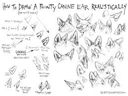 drawn wolf ear pencil and in color drawn wolf ear