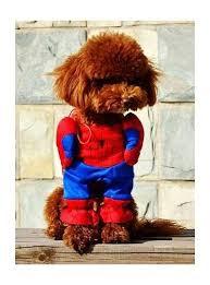 Spider Dog Halloween Costume 25 Dog Spider Costume Ideas Spider Dog