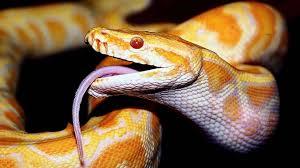 desktop snake images free download wallpaper
