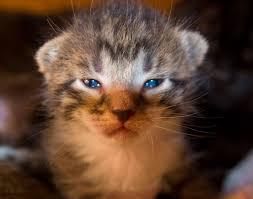 Kitty Meme Generator - angry kitten is angry jasper nance flickr