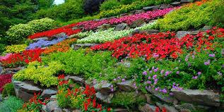 how to garden landscape plant garden design